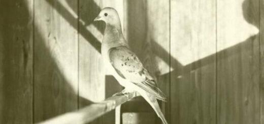 Passenger Pigeon Manifesto